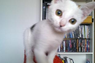 Elindult a macskabolondok blogja!