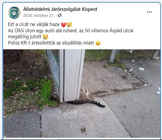 Ezt a cicát ne várják haza. Az Üllői úton egy autó alá rohant, az 50 villamos Árpád utcai megállóig jutott.<br />Polisz Kft-t értesítettük az elszállítás miatt.<br /><br />https://www.facebook.com/743811389061907/posts/3138760912900264/