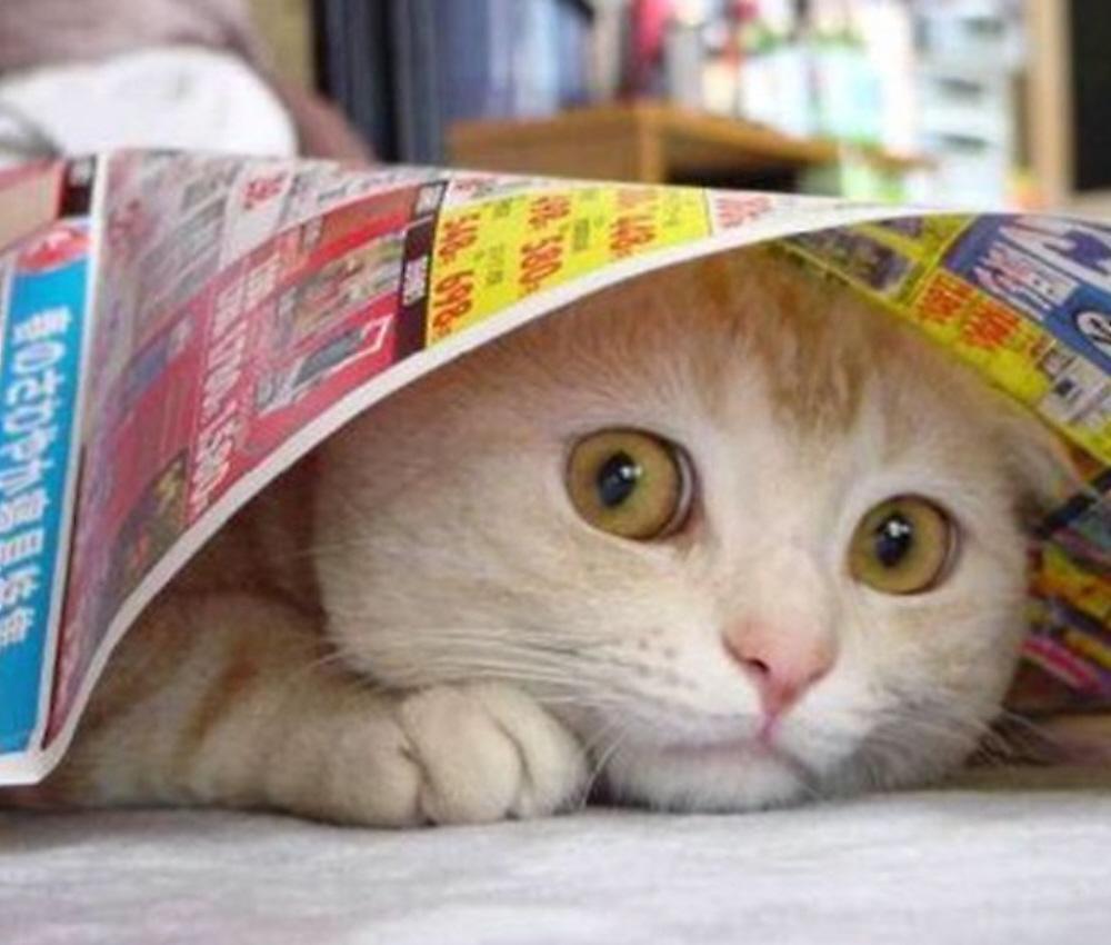 01-scaredy-cat1.jpg