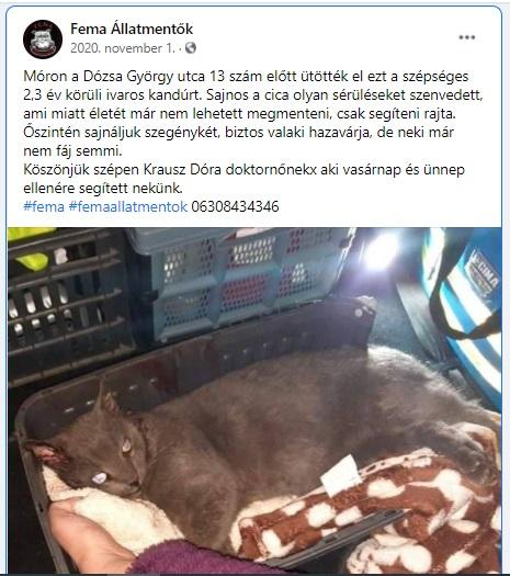 Móron a Dózsa György utca 13 szám előtt ütötték el ezt a szépséges 2,3 év körüli ivaros kandúrt. Sajnos a cica olyan sérüléseket szenvedett, ami miatt életét már nem lehetett megmenteni, csak segíteni rajta.<br />Őszintén sajnáljuk szegénykét, biztos valaki hazavárja, de neki már nem fáj semmi.<br />Köszönjük szépen Krausz Dóra doktornőnek, aki vasárnap és ünnep ellenére segített nekünk.<br /><br />https://www.facebook.com/314526565313326/posts/3269389756493644/