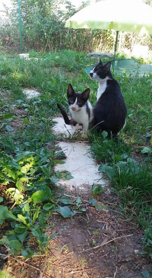 Az Állatmentő Sereg (https://www.facebook.com/cicasereg) segítségével örökbe fogadható cicák.