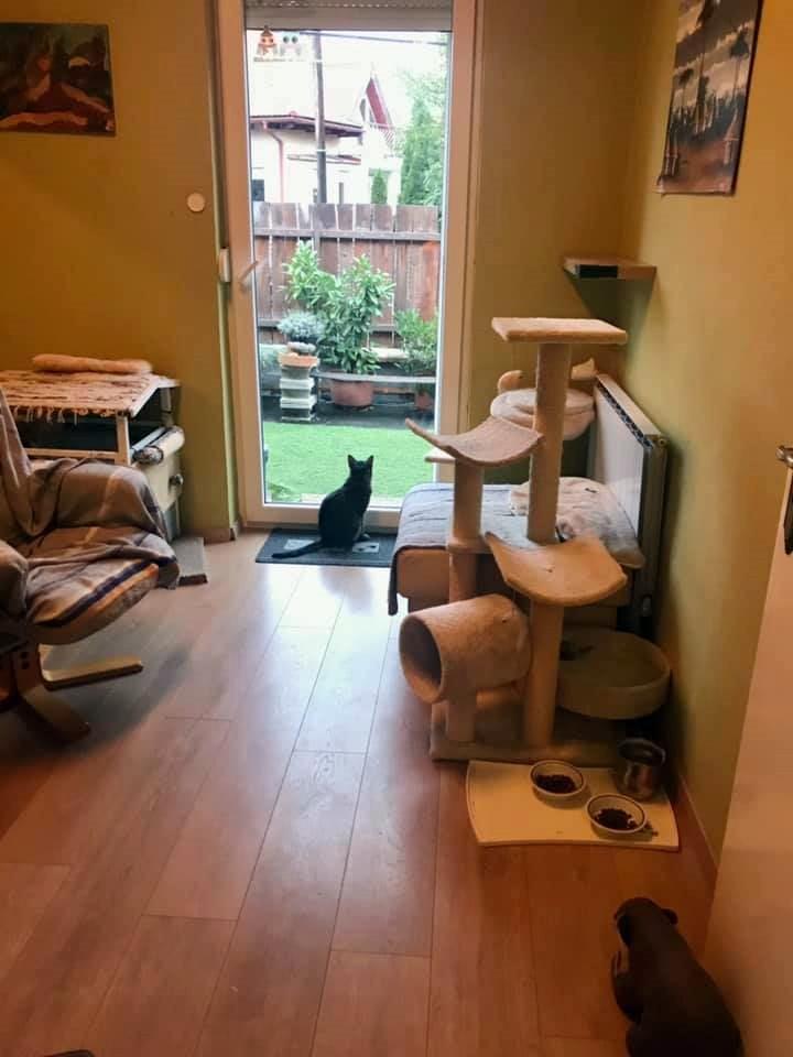 Krisztáéknál külön szoba van a macskáknak.