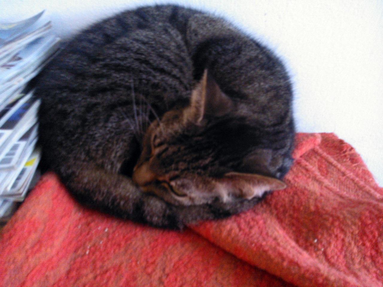 Kemi nyugodtan alszik a közelemben