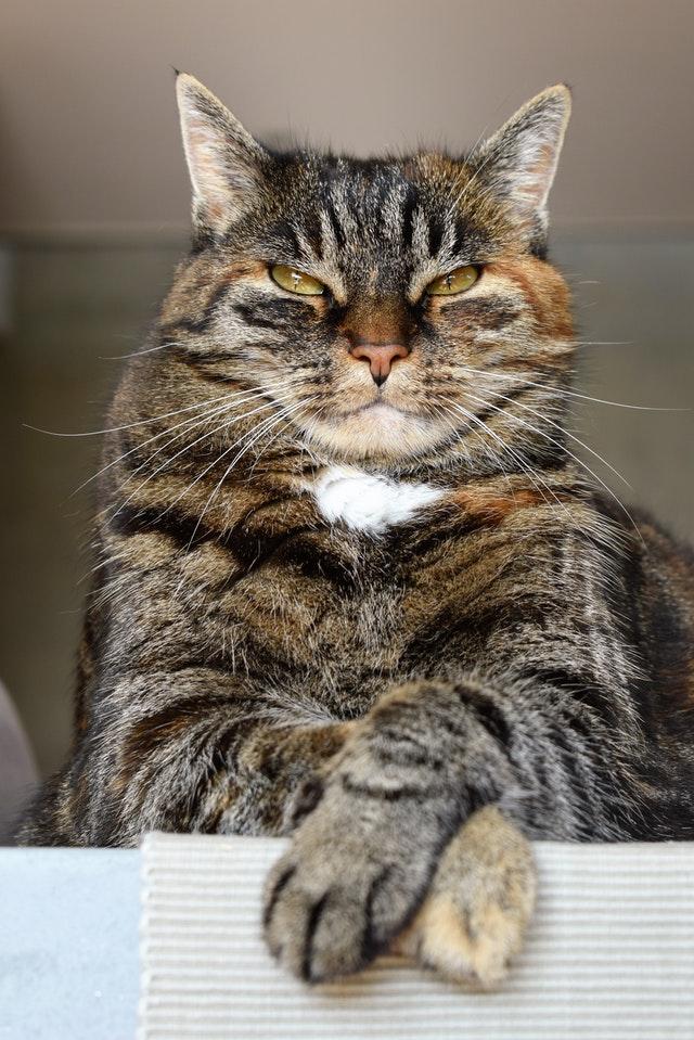adorable-angry-animal-208984.jpg