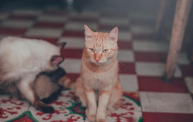 adorable-animal-animal-photography-1003996.jpg