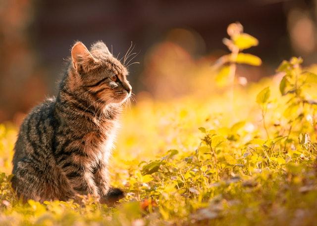 adorable-animal-anxious-669015.jpg