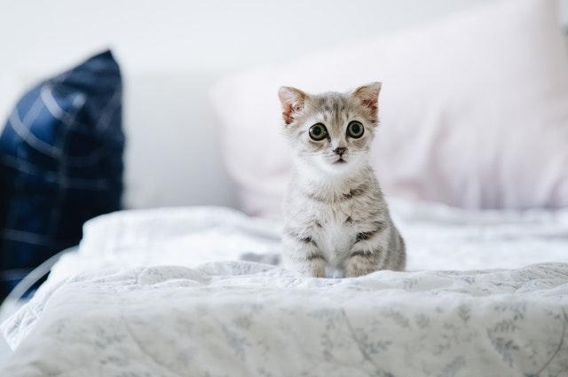 adorable-animal-bed-2061057_1.jpg
