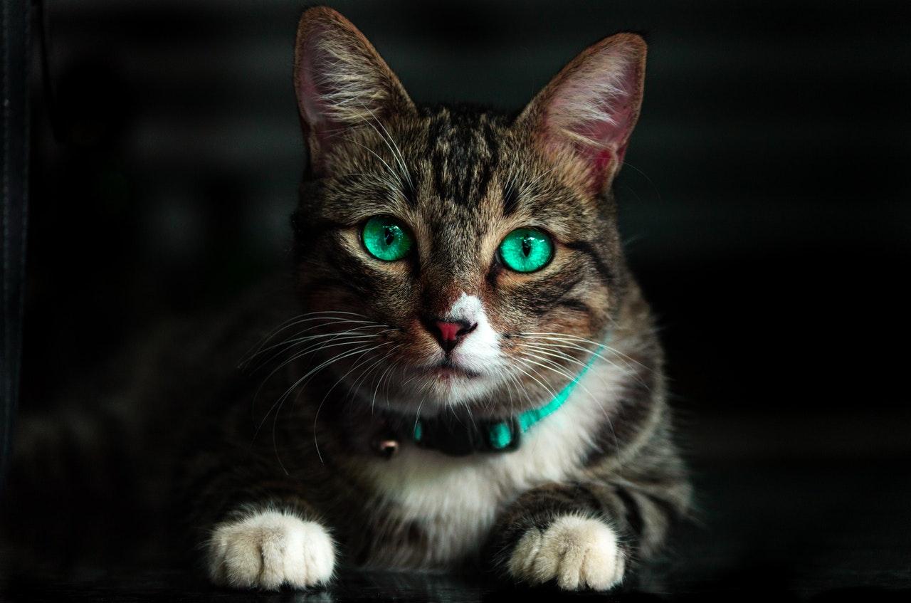 adorable-animal-blur-617278.jpg
