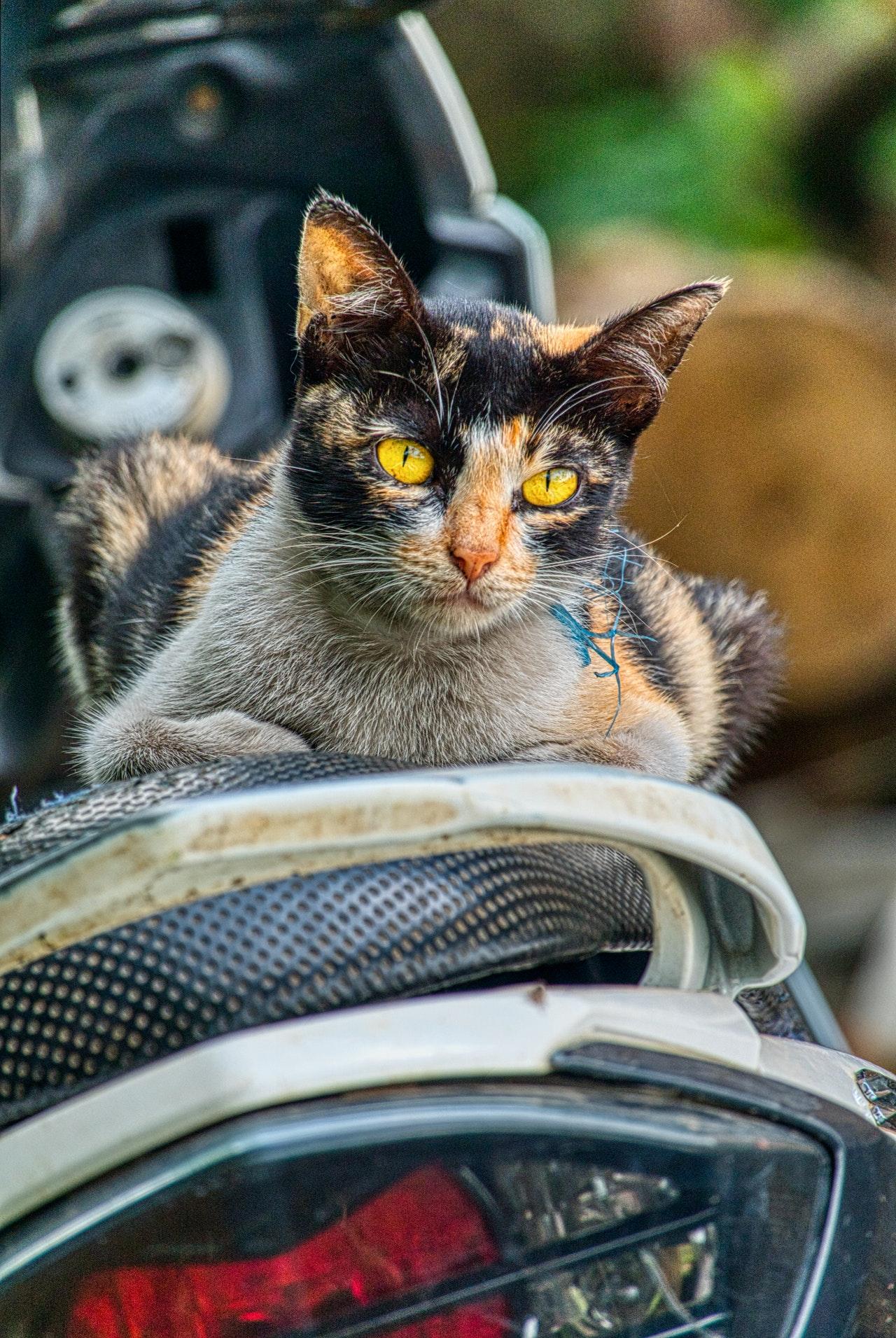 adorable-animal-cat-2589324.jpg