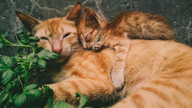 adorable-animal-photography-animals-1096091.jpg