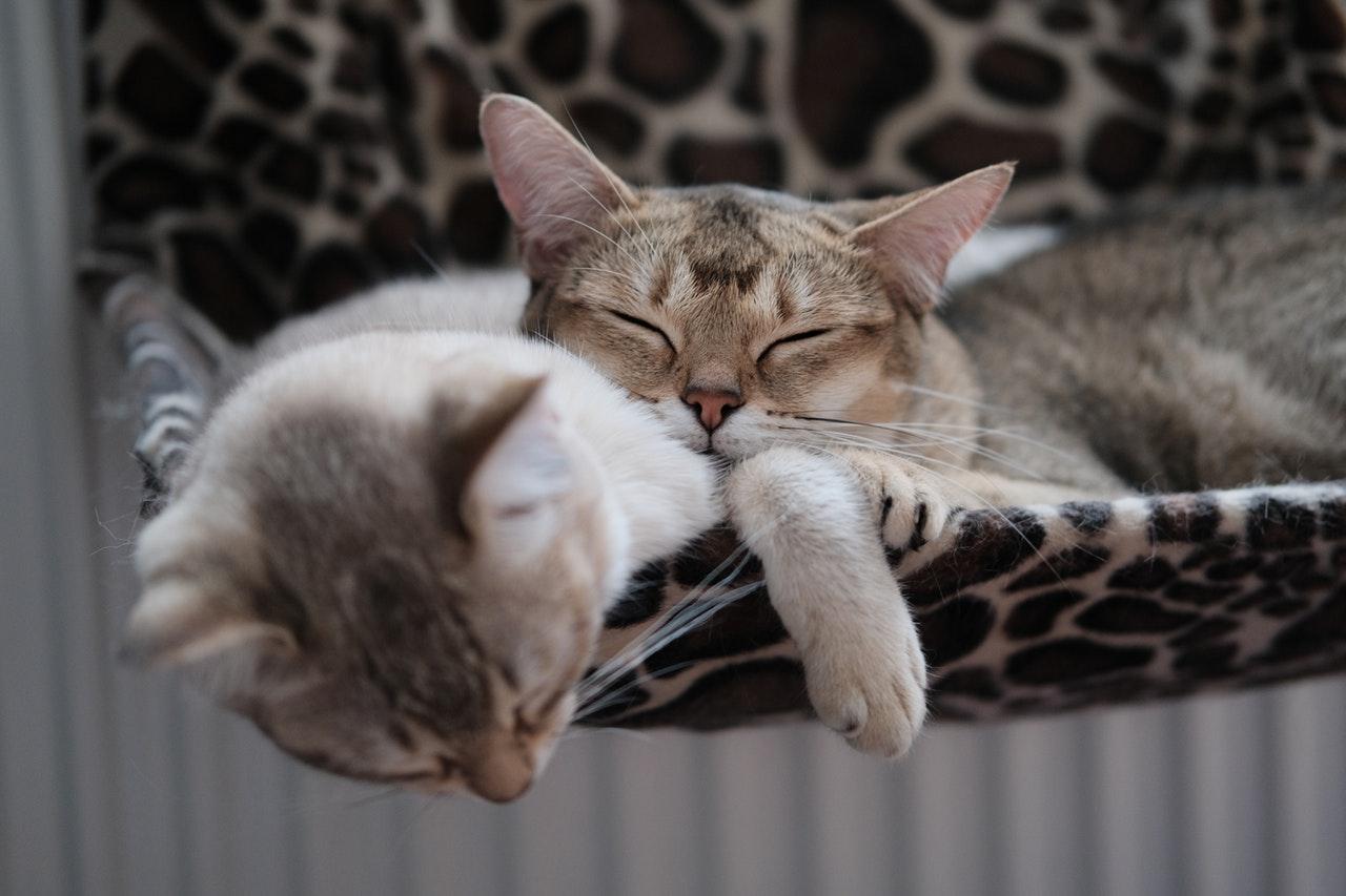 adorable-animal-photography-animals-2870510.jpg
