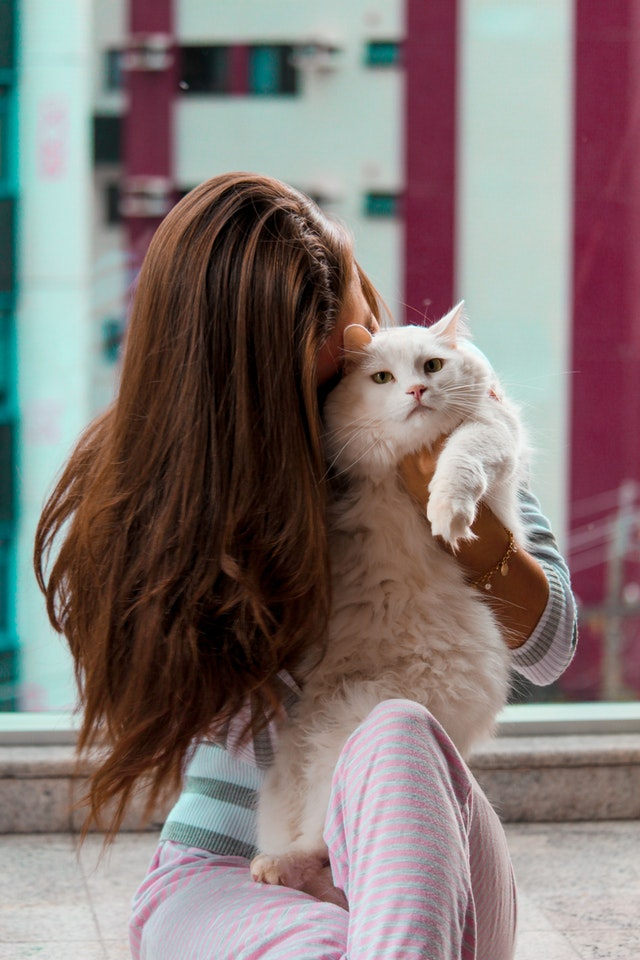adorable-beautiful-cat-2118863_1.jpg