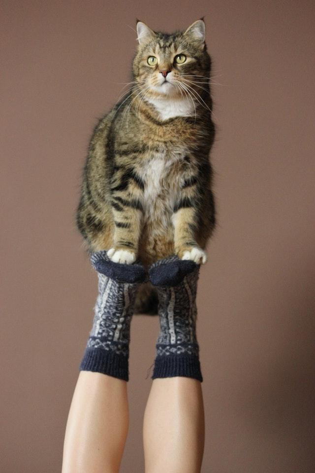 animal-animal-photography-bicolor-cat-3054570.jpg