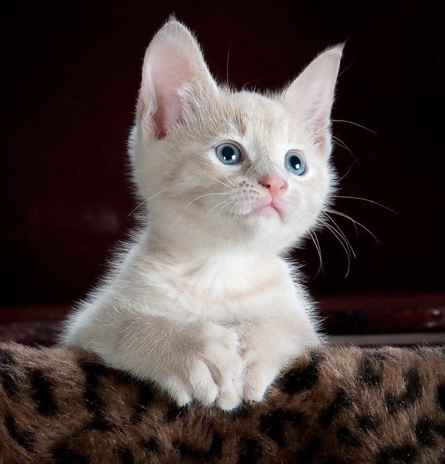 animal-animal-photography-cat-45201_1.jpg