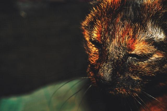 animal-blur-cat-128604.jpg