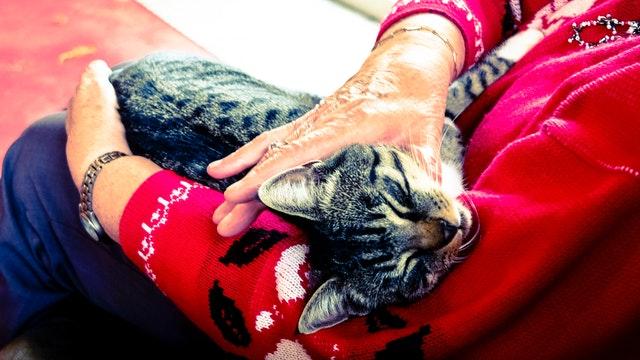 animal-cat-elderly-233220.jpg