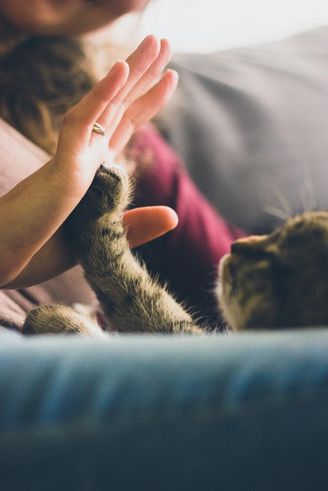 animal-cat-feline-38867.jpg