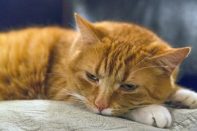 animal-pet-cute-fur-137023.jpg