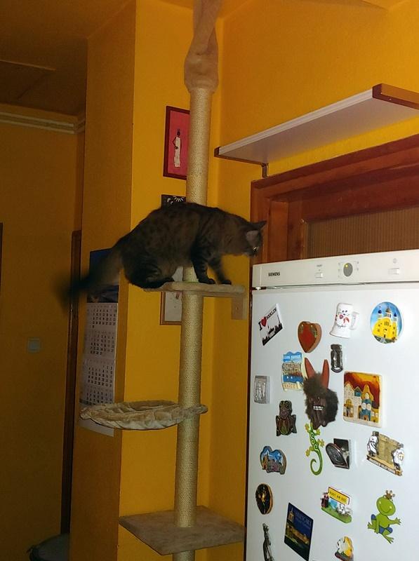 A gazdi szerint a cicája az oszlopokon úgy kapaszkodik, mint egy fán