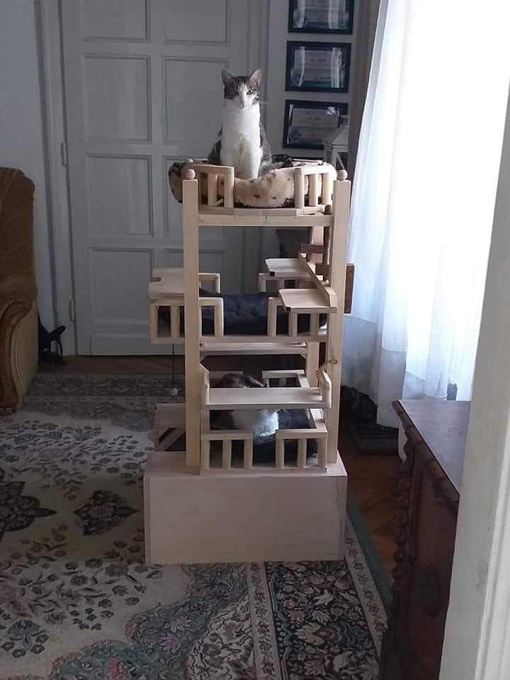 A gazdi csinálta a cicájának ezt a cicapalotát