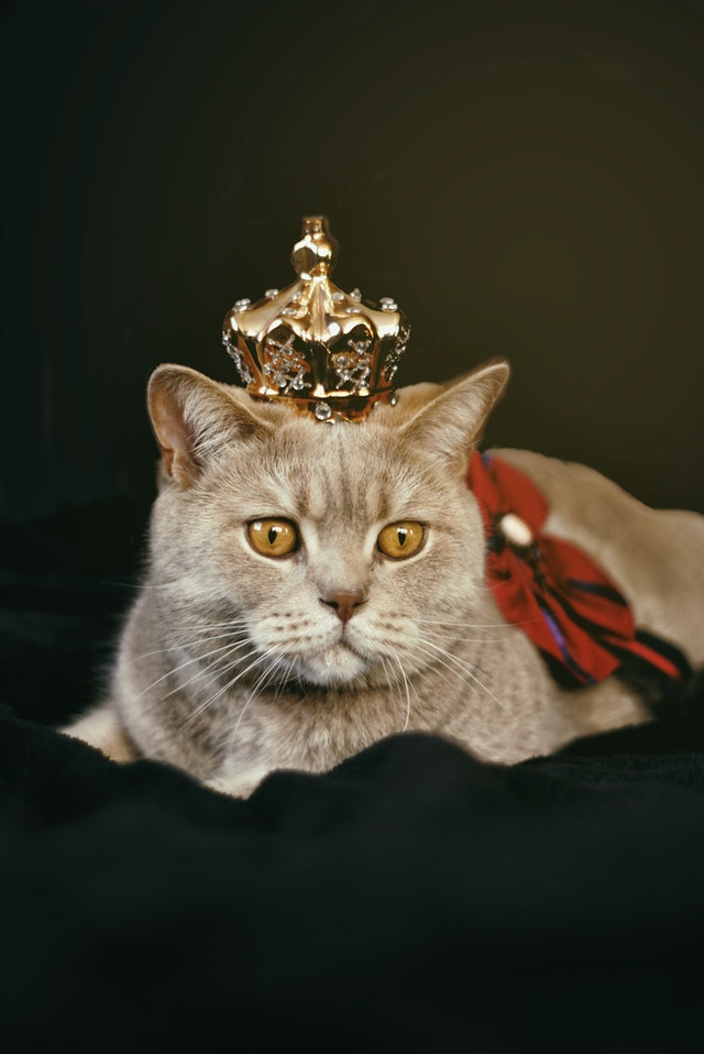 beige-cat-with-gold-colored-crown-1314550.jpg