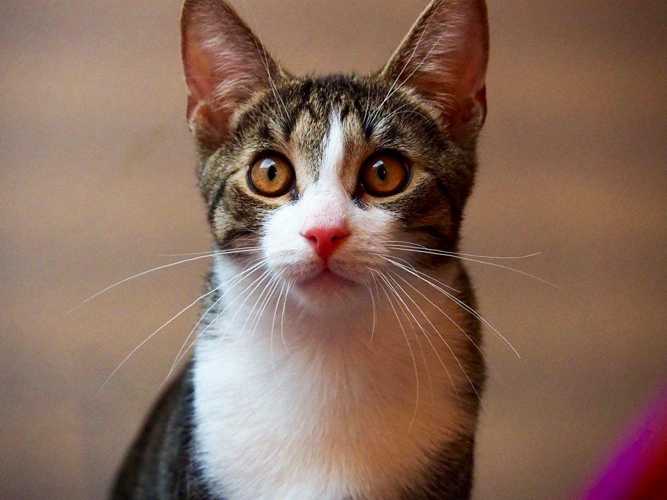 Buburól a Cat Flow Macskamentésnél érdeklődj!