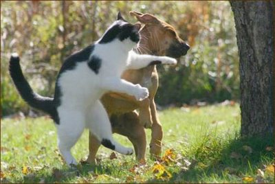 cat-fight-a-dog.jpg