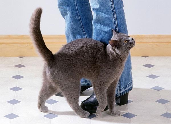 cat-rubbing-on-leg.jpg