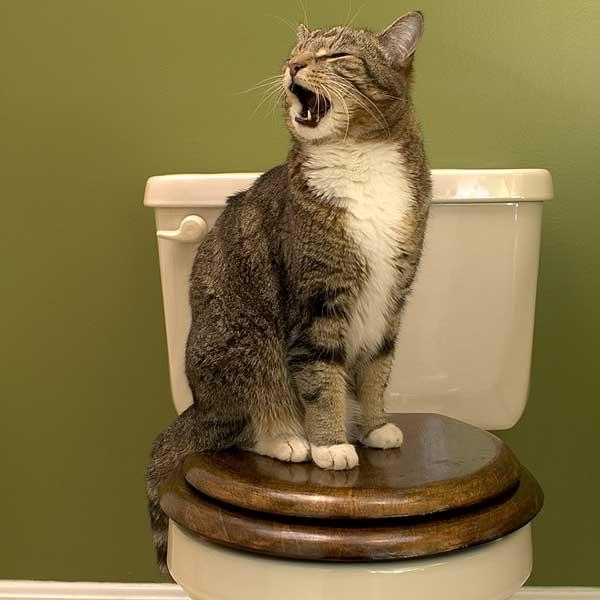 cat-toilet_1.jpg
