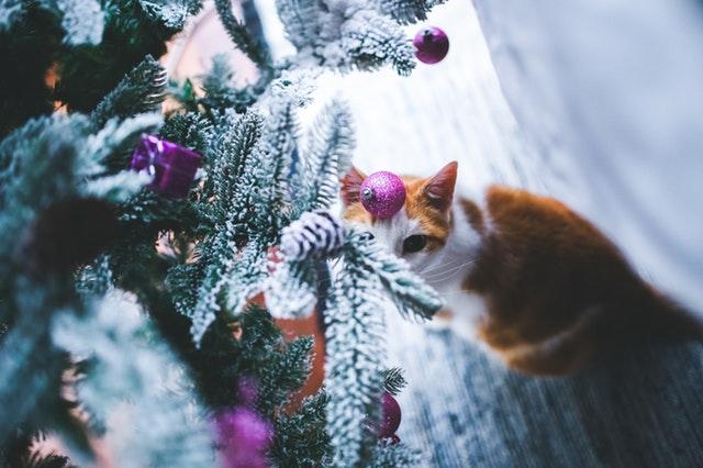 cat-under-the-christmas-tree-6279.jpg