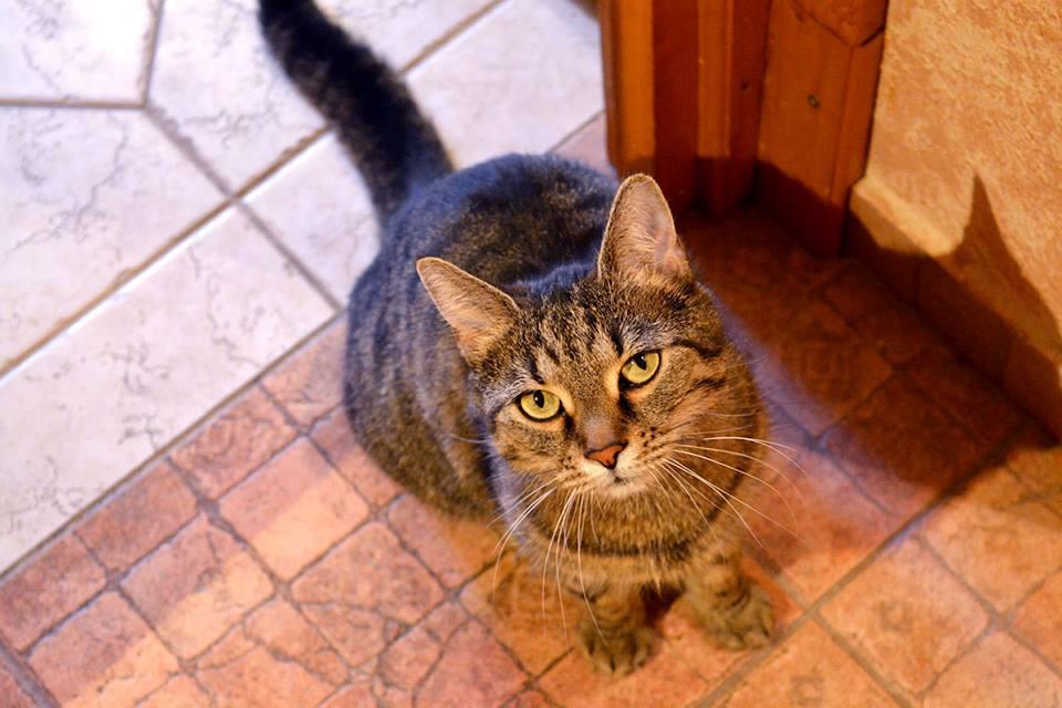 Galuskáról a Cat Flow Macskamentésnél érdeklődj!