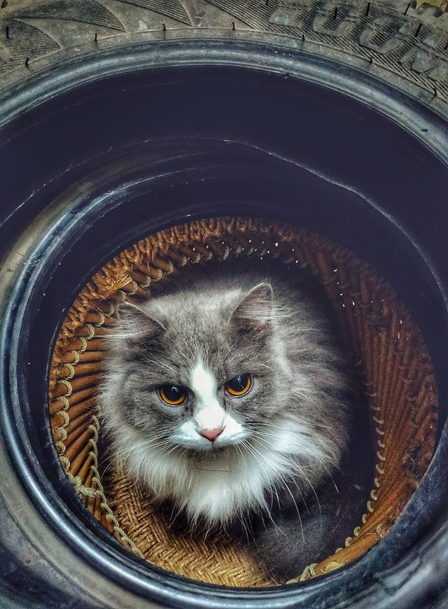 gray-and-white-cat-on-tire-1697100.jpg