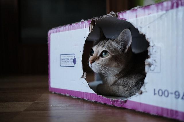 gray-cat-inside-white-and-purple-box-2870497.jpg
