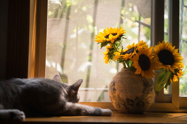 gray-cat-near-brown-vase-with-sunflowers-674580.jpg