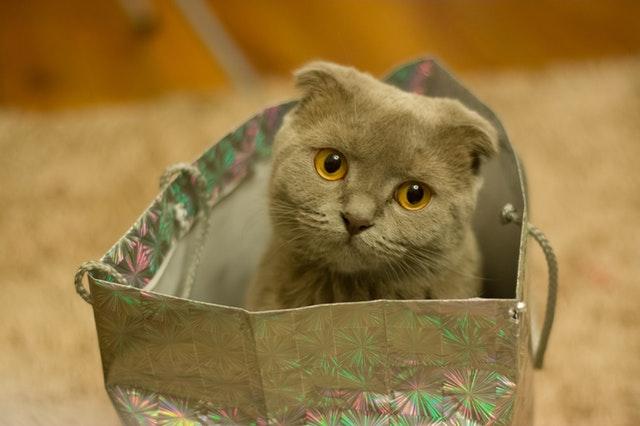 grey-kitten-on-silver-paper-bag-141496.jpg