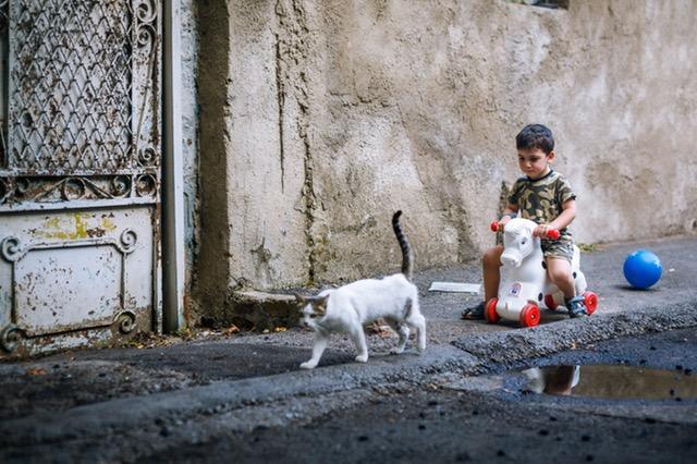 humanities-kitty-play-child-163702_1.jpeg