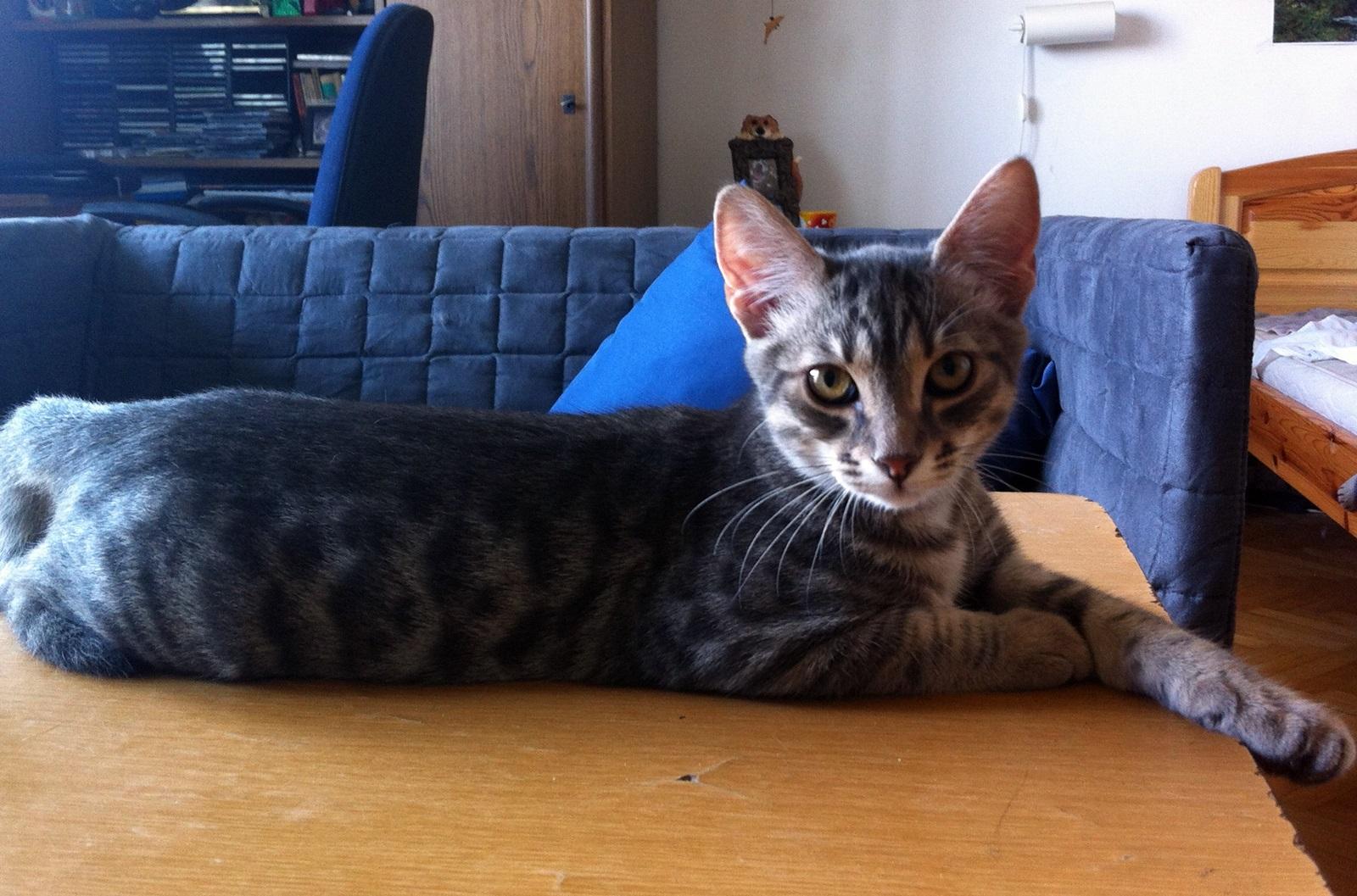 Ismered a cicád? Fáramászó vagy barlangász típus? Szeretem