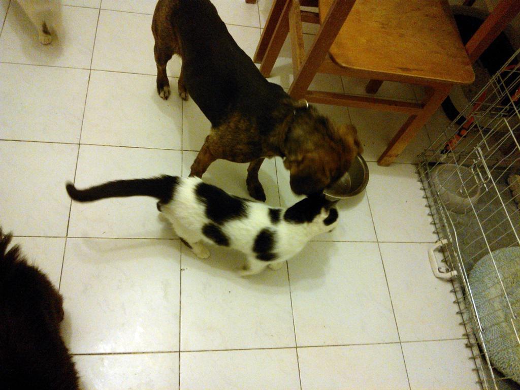 kutya-macska_1.jpg