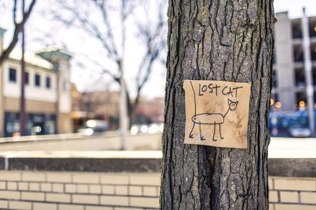 lost-cat-tree-sign-fun-159868.jpeg