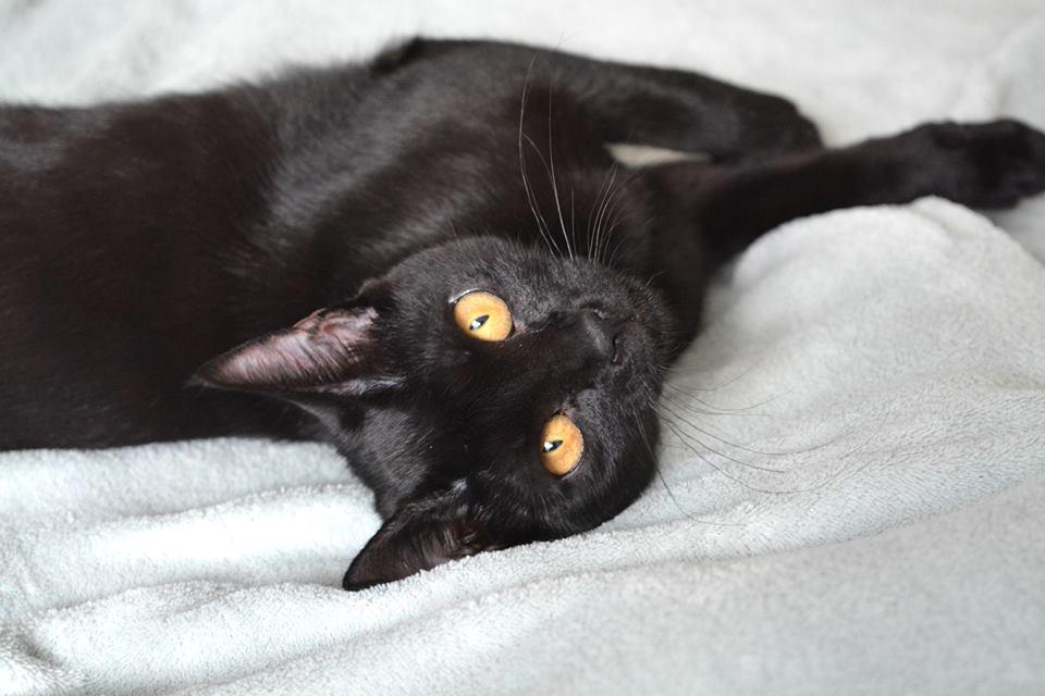 Manduláról a Cat Flow Macskamentésnél érdeklődj!