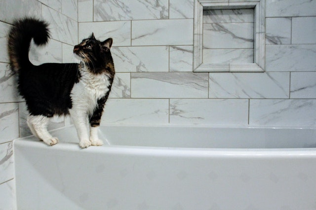 medium-haired-white-and-black-cat-on-tub-1662529.jpg