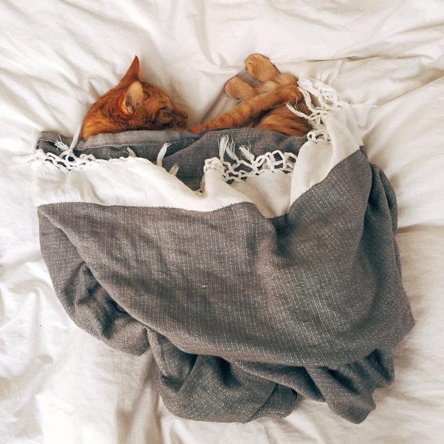 orange-tabby-cat-sleeping-on-white-textile-103651.jpg