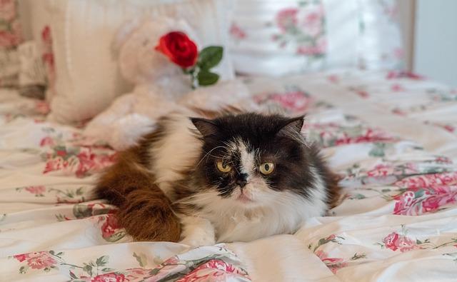 persian-cat-4094239_640.jpg