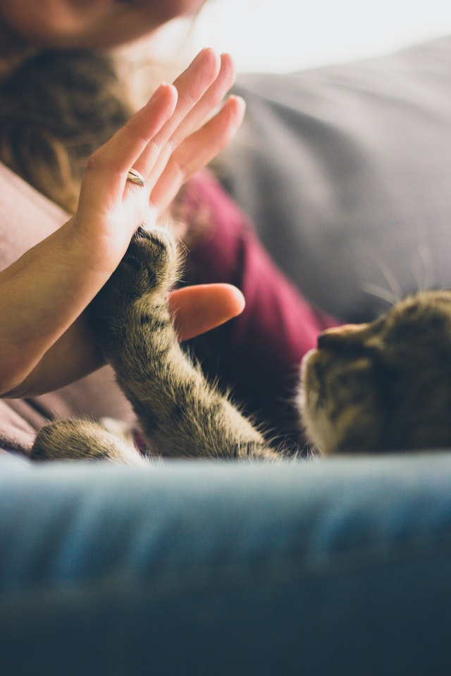 person-giving-high-five-to-grey-cat-38867.jpg