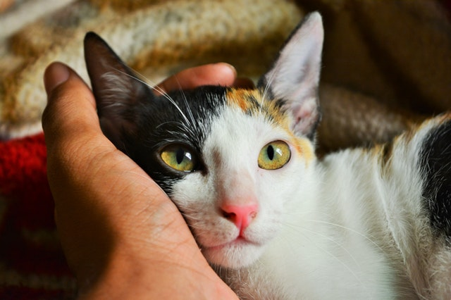 person-s-left-hand-holding-calico-cat-790033.jpg