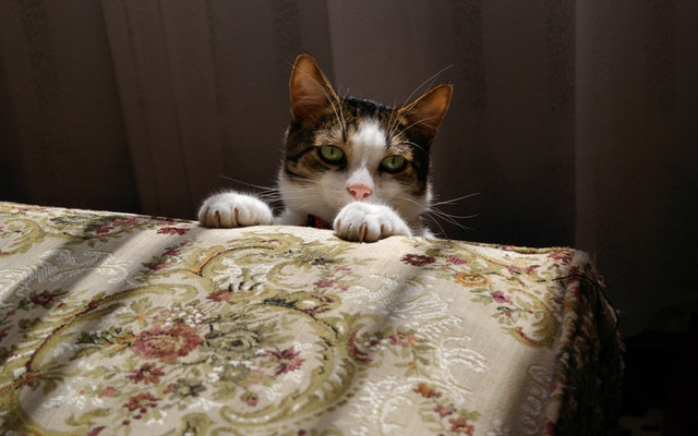 photo-of-cat-1382134.jpg