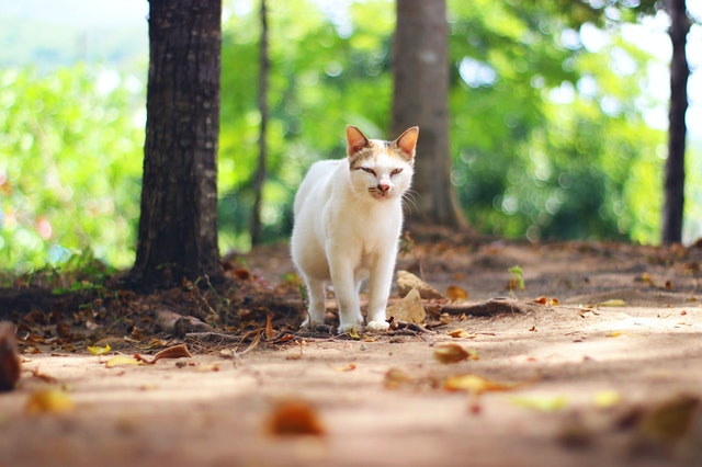 photo-of-cat-on-dried-leaves-4066707.jpg