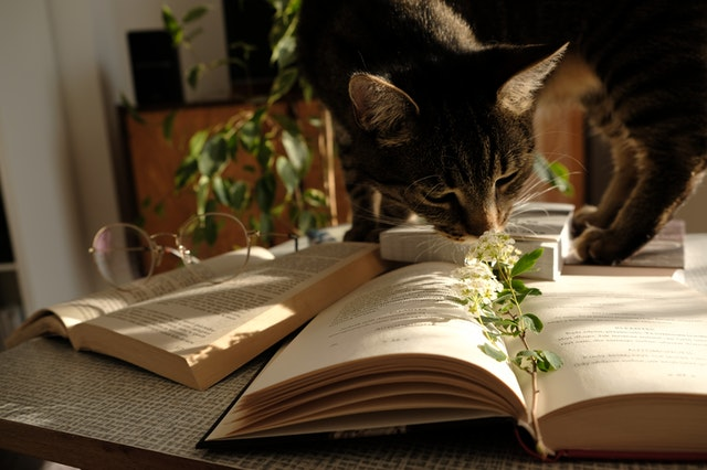 photo-of-cat-standing-on-top-of-a-book-2383122.jpg