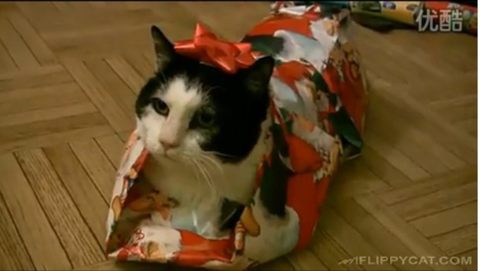 post-11972-how-to-wrap-a-cat-for-christma-f5xg.jpeg