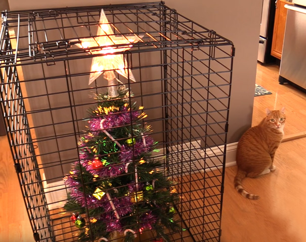 protecting-christmas-tree-from-dogs-cats-pets-4-585a611c97b73_605.jpg